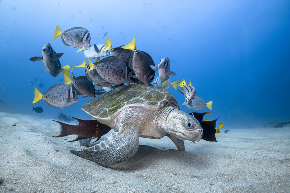 underwater sea animal photography turtle by henley spiers