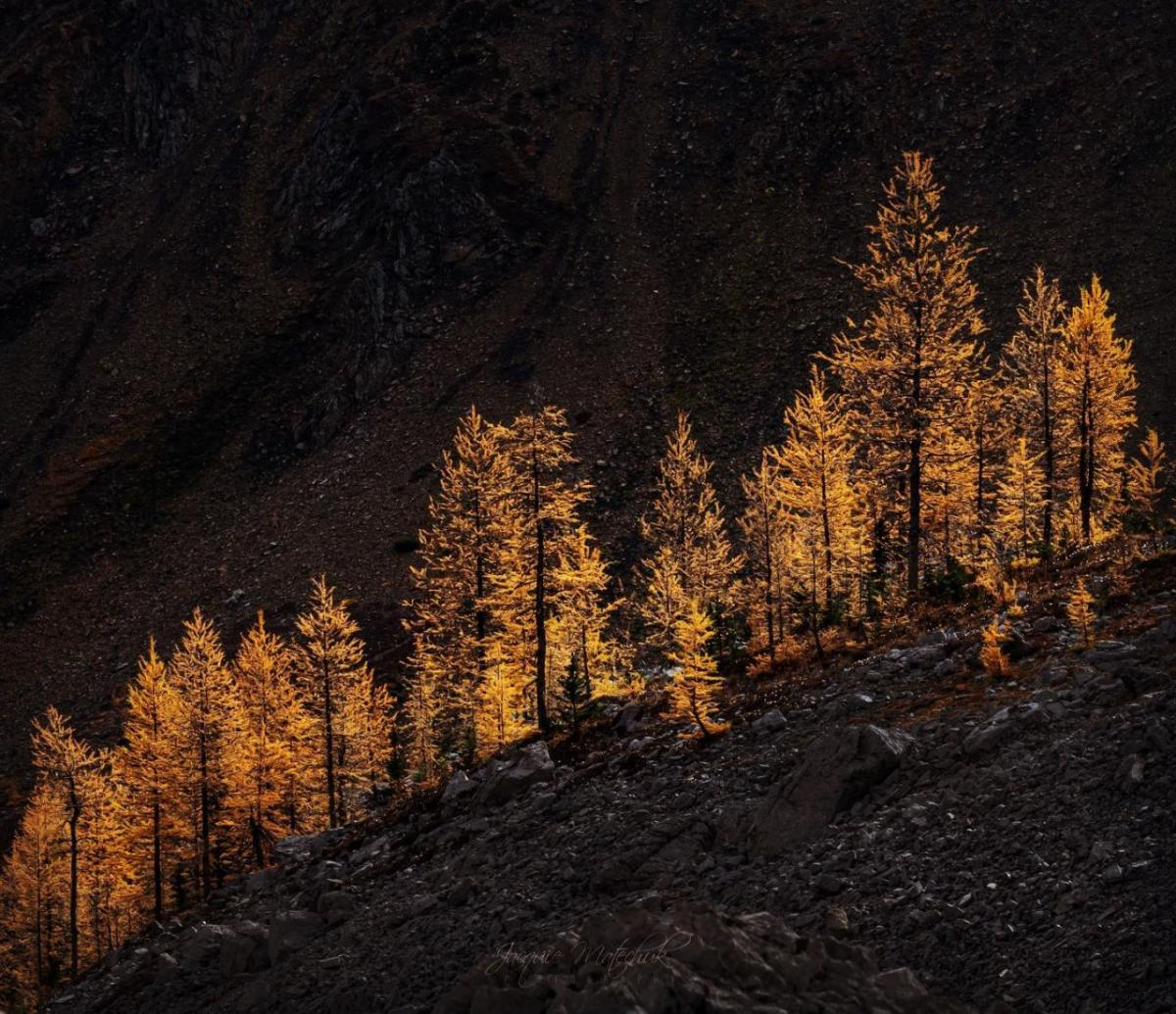 landscape photography golden hues by jacquie matechuk